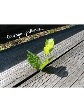 Carte courage 1