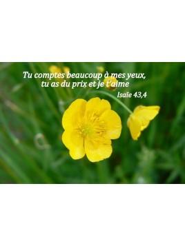 Carte Bible 8