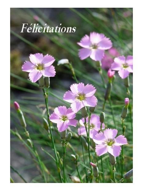 Carte De Felicitations Avec Des Fleurs Deprintemps